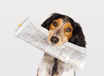Photo of Dog with Newspaper
