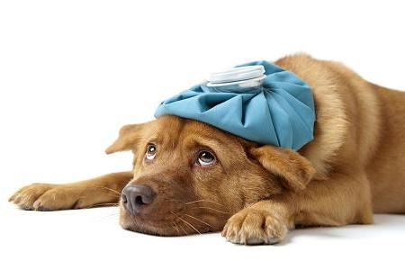 Photo of sick dog