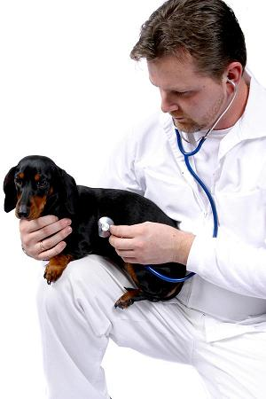 Photo of vet checking dog's heart