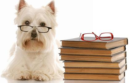 Photo of Westie wearing glasses with a stack of books